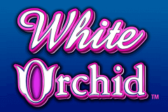 logo white orchid igt juegos casino